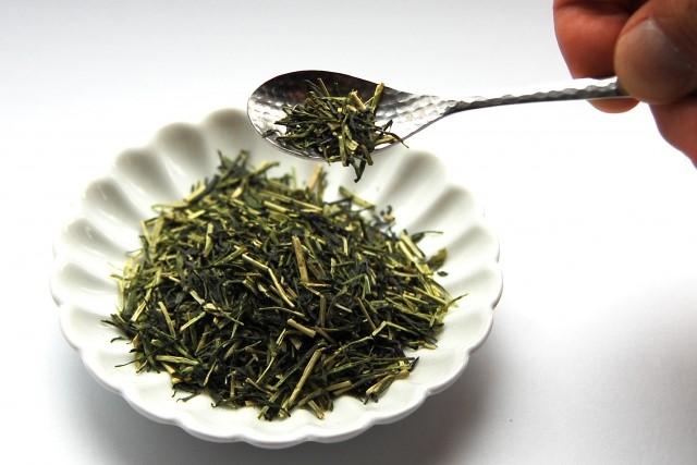 茶カテキンの原料、宇治茶
