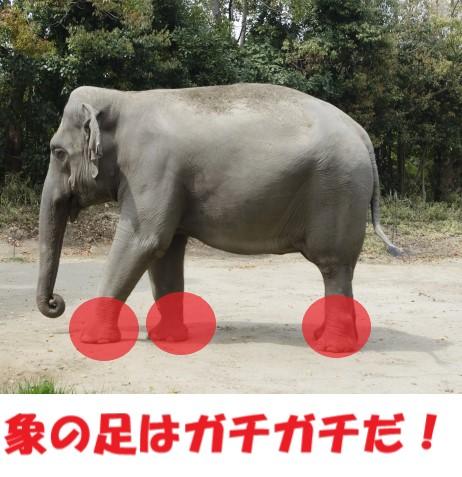 足への圧力が強い象