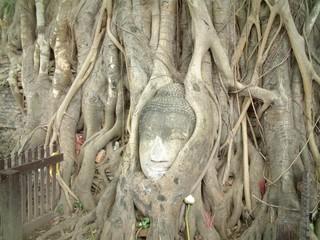 アユタヤ木の中にいる仏頭
