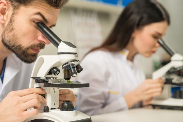 顕微鏡でプロポリスを研究する人