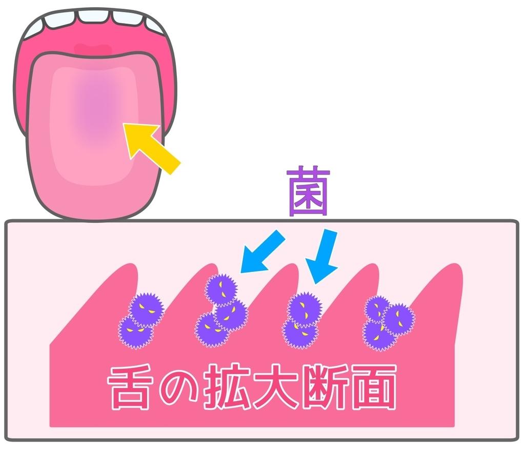 舌苔の仕組みを表した図
