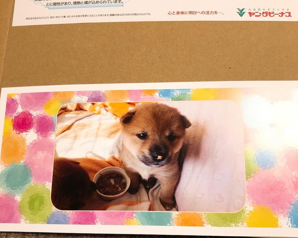 mukuのお試しセット6パックに同封されている犬の写真
