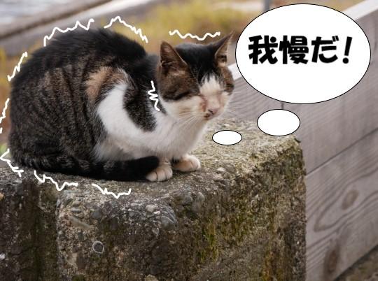 歯を食いしばって耐える猫