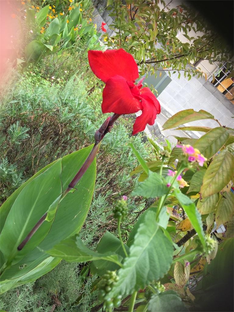 f:id:deco-pin-love:20161019122216j:image