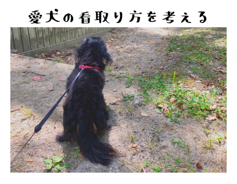 愛犬の看取り方を考える