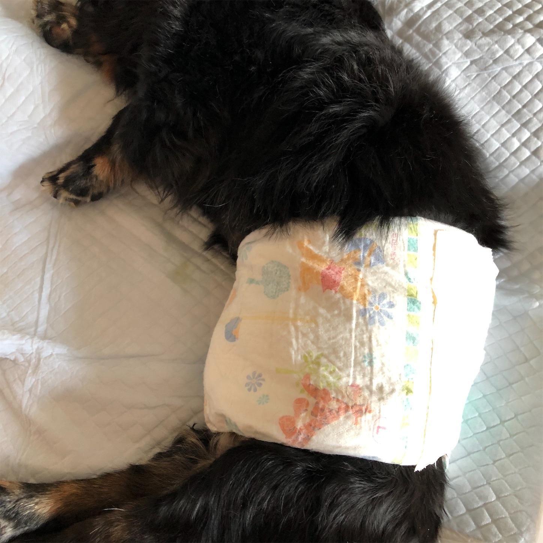 犬のオムツを赤ちゃん用おむつで代用
