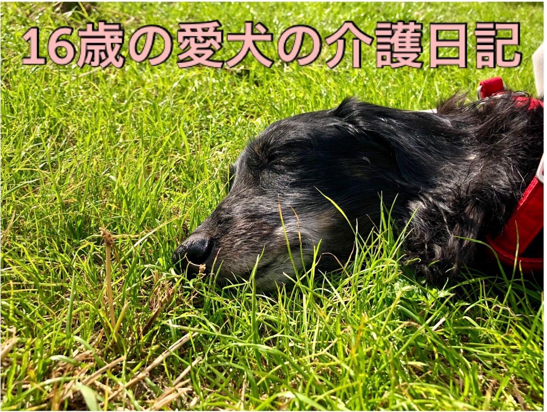 老犬の介護【夜中の痰絡みと呼吸困難】