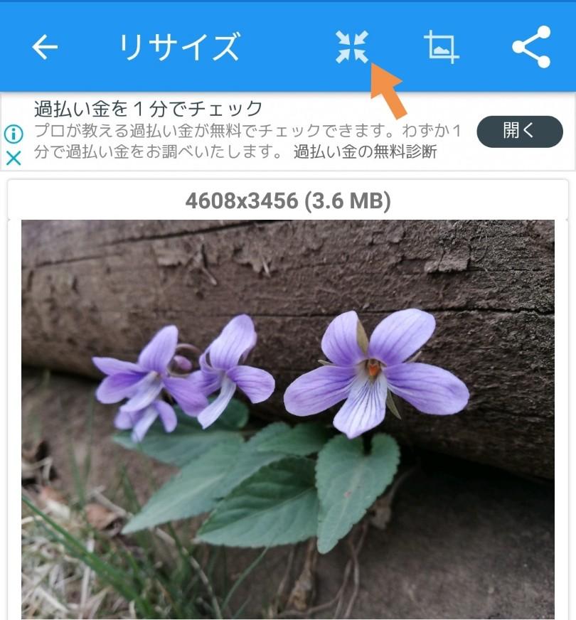 f:id:deep-blue00:20190411141100j:plain