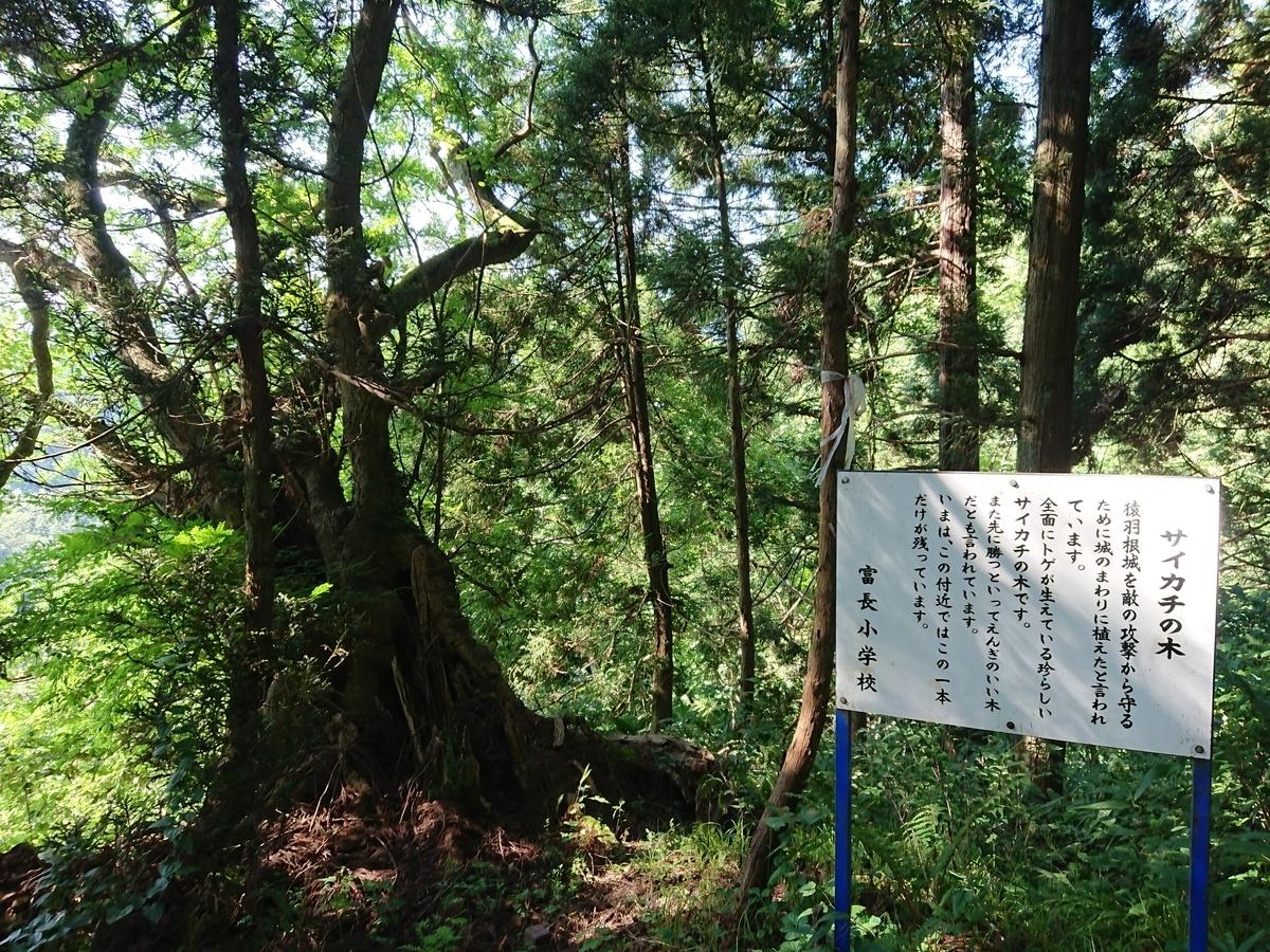 f:id:deep-karuma-waap-ec-real-s1:20191002001419j:plain