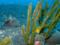 アミメハギ幼魚