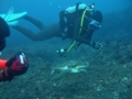 のんびりアオウミガメ
