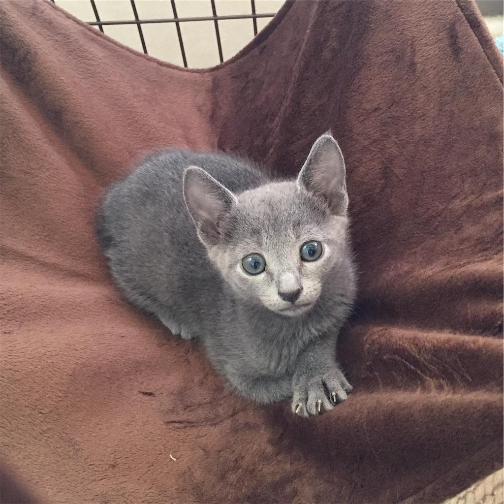 f:id:deerhuntercat:20200125115405j:image