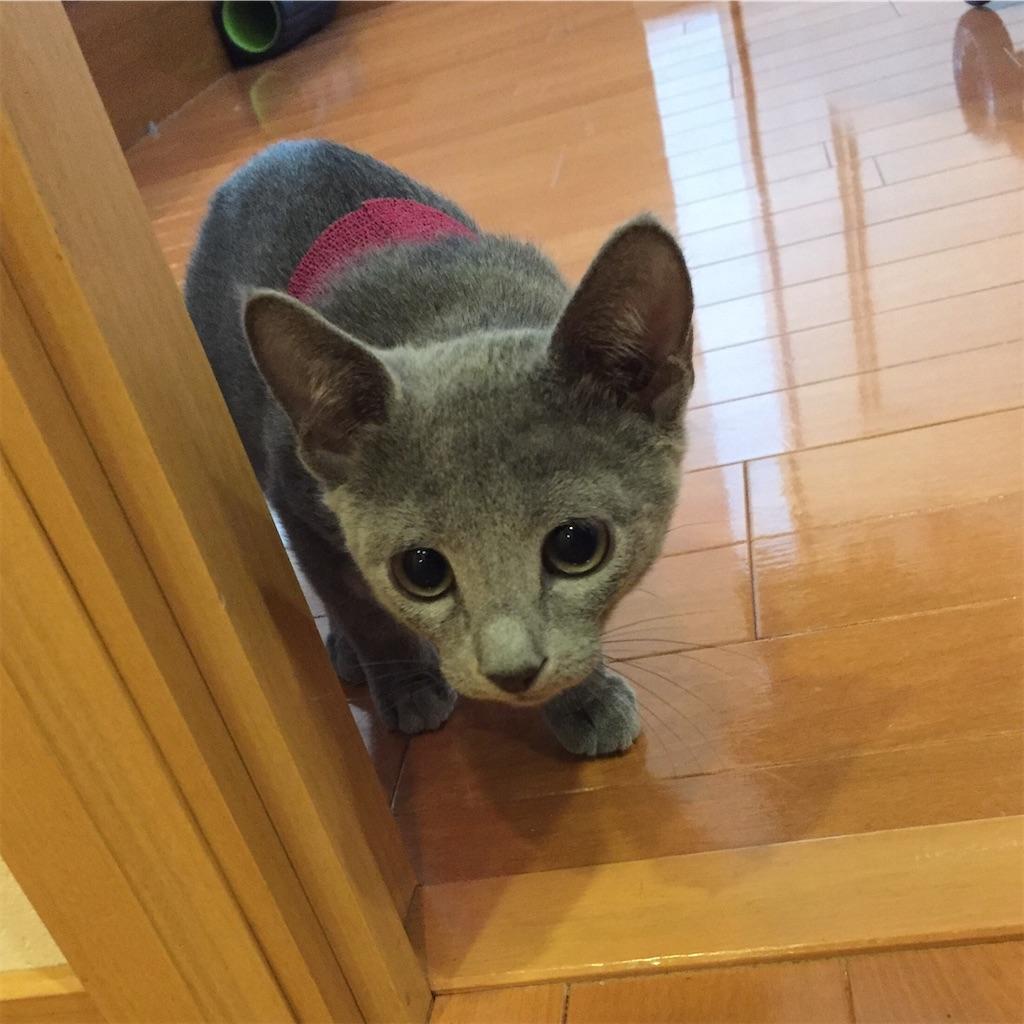 f:id:deerhuntercat:20200125115712j:image