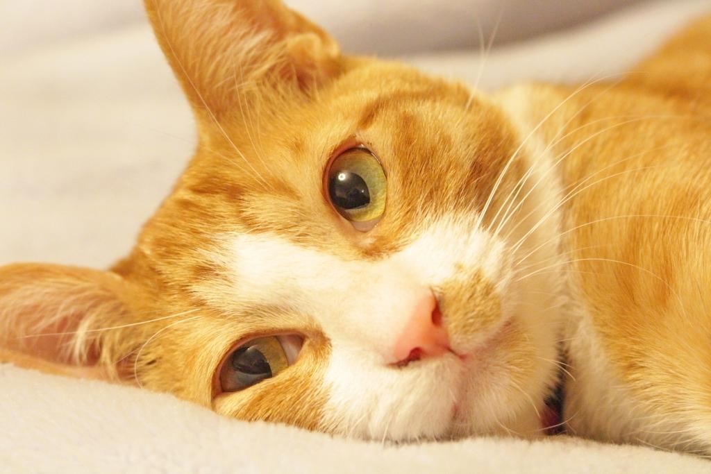 猫の動画を投稿