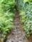 金鱗湖から流れ出る源流