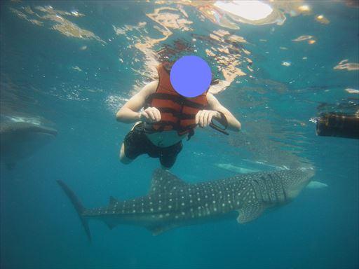 ジンベイザメと泳ぐ