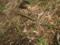 竹の地下茎ですが