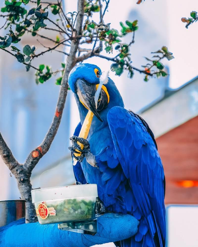 鳥が歯磨きしている写真