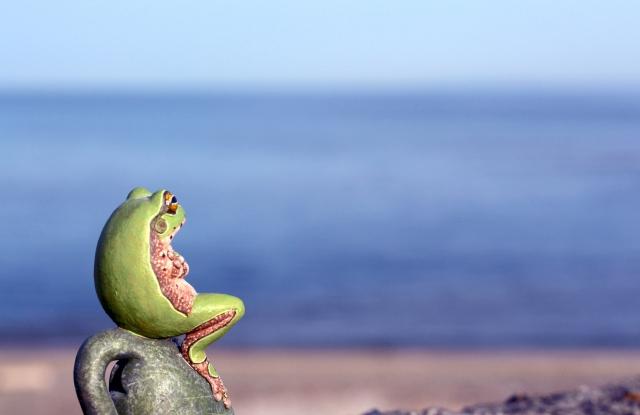 蛙と大海原の画像