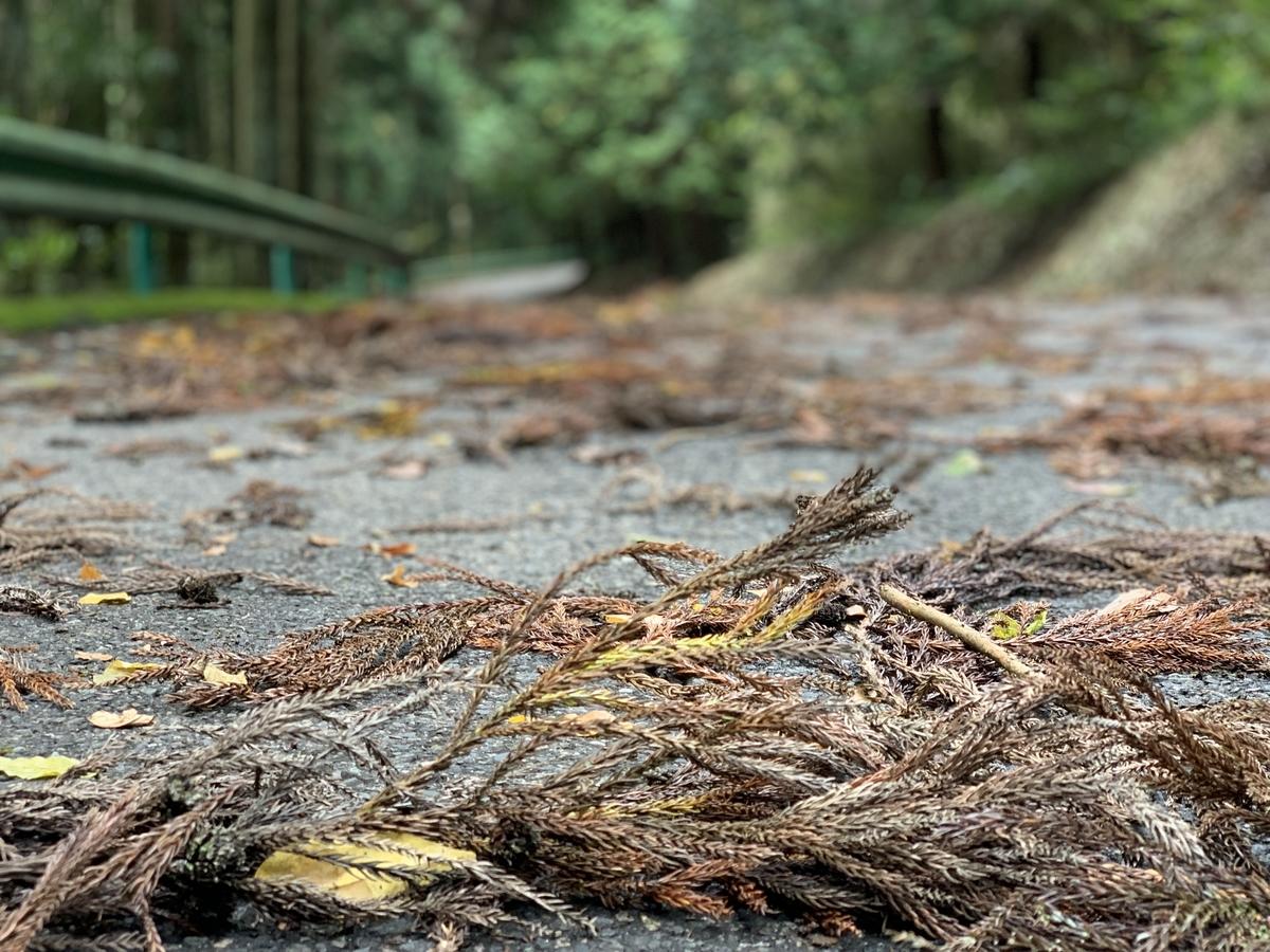 杉の落ち葉が酷い事になっていた今日の古賀志山