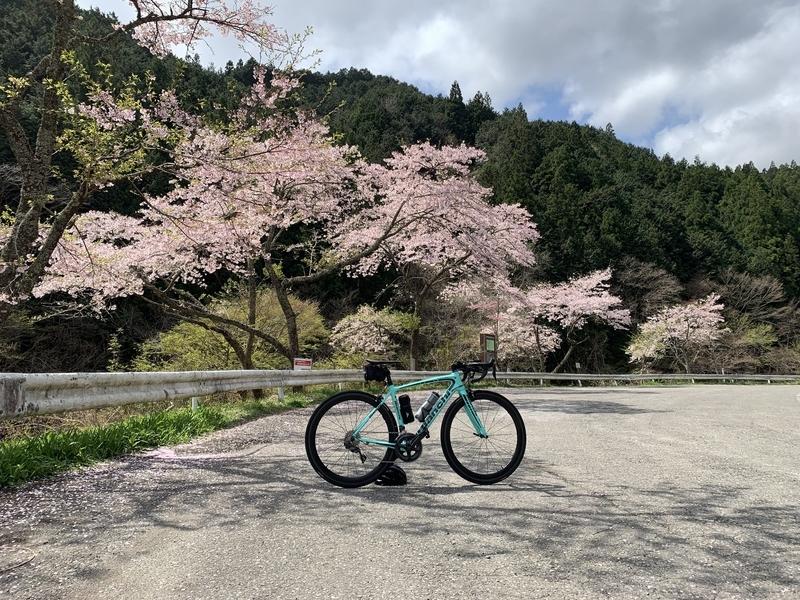 栃木県道149号線、黒川沿いの桜並木とビアンキ