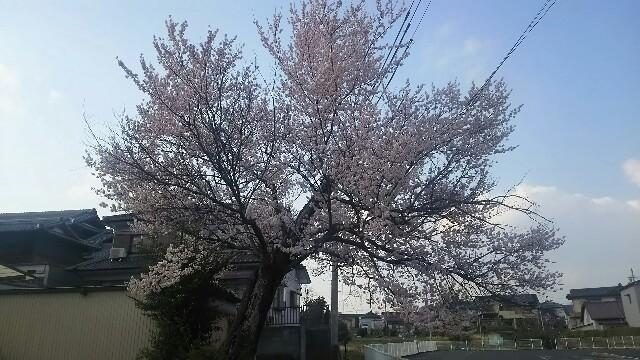 f:id:dera_noki:20170403224146j:image