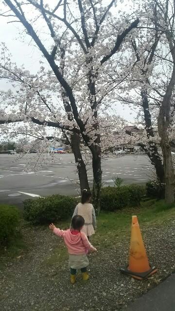 f:id:dera_noki:20170407234547j:image