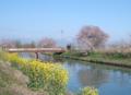 京都新聞写真コンテスト のどかな春