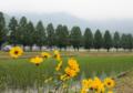 京都新聞写真コンテスト 住みたい場所