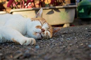 たまには猫になりたい