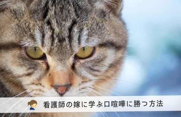 喧嘩の強そうな猫