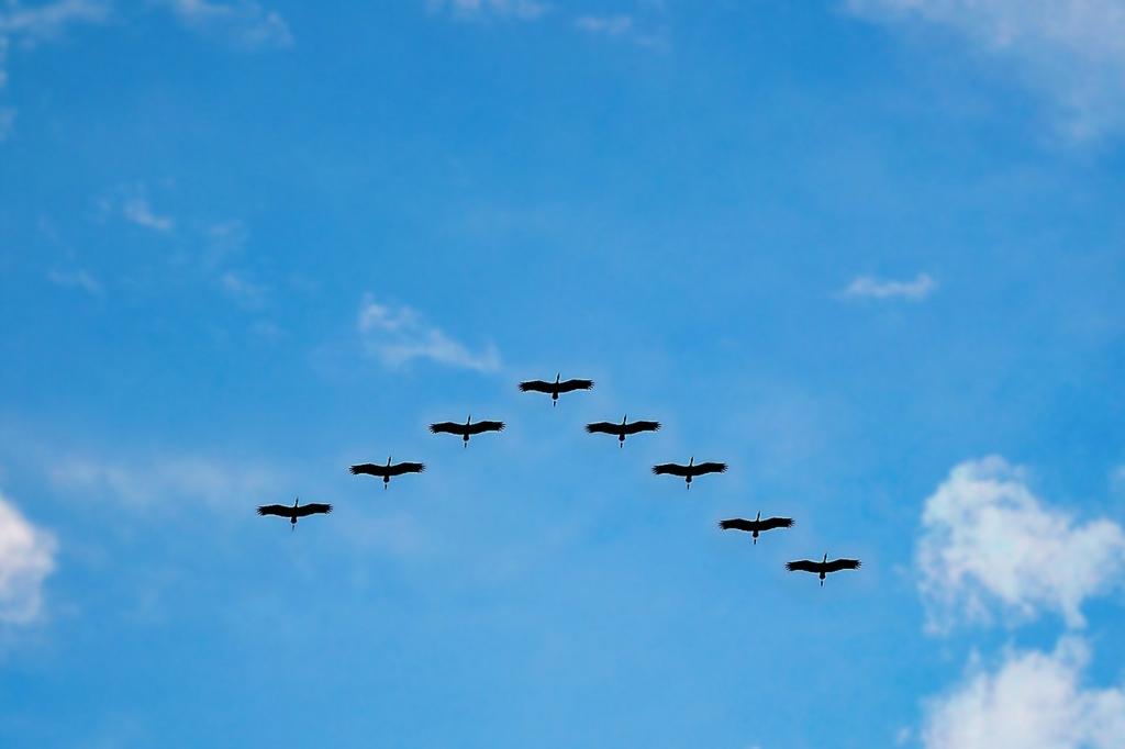 華麗に飛ぶ鳥