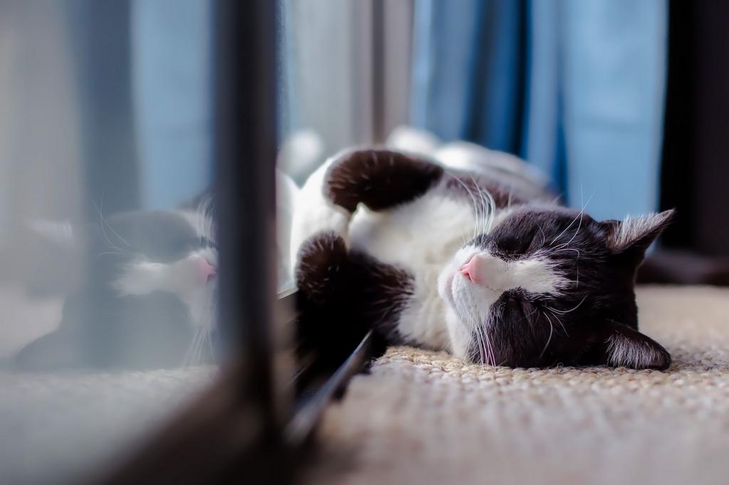 猫:逆らわずにすんなり