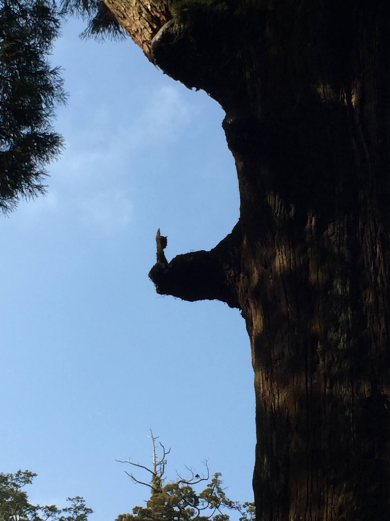 霧島神宮のご神木の不思議