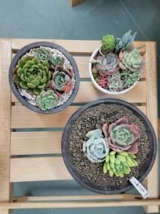 寄せ植え3鉢