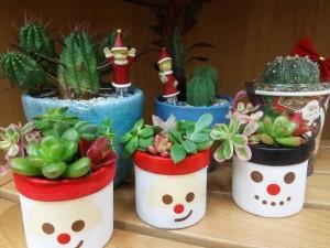 クリスマス寄せ植え1