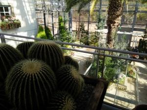 緑化植物園3