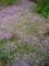 5月の秋田 その2 苧環と芝桜3
