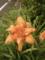 立原道造と花 3