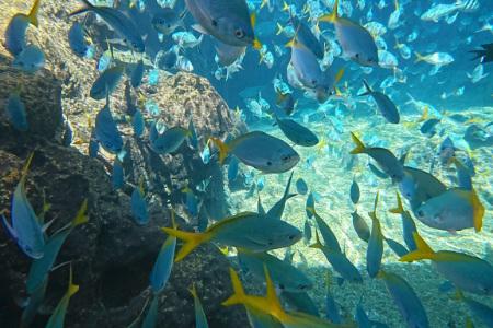 アドベンチャーコーブウォーターパーク 海水 プール シュノーケリング 熱帯魚
