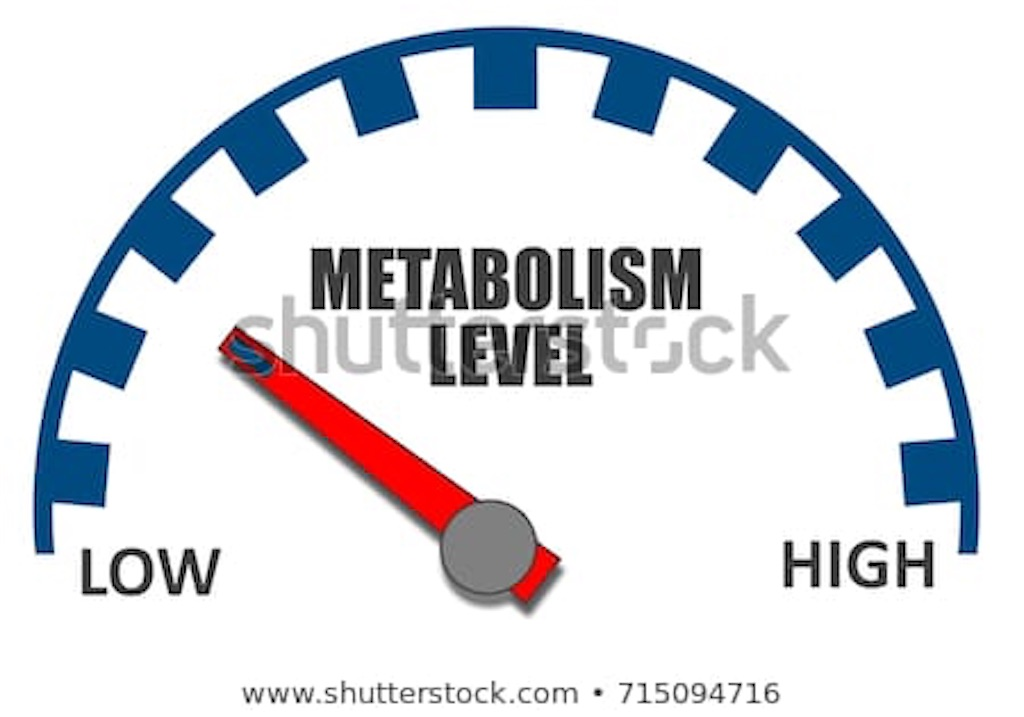 f:id:diet-merit:20190508204019j:image