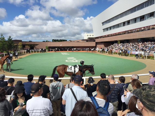 札幌競馬場のパドック。馬の毛艶がすごいんじゃ~!