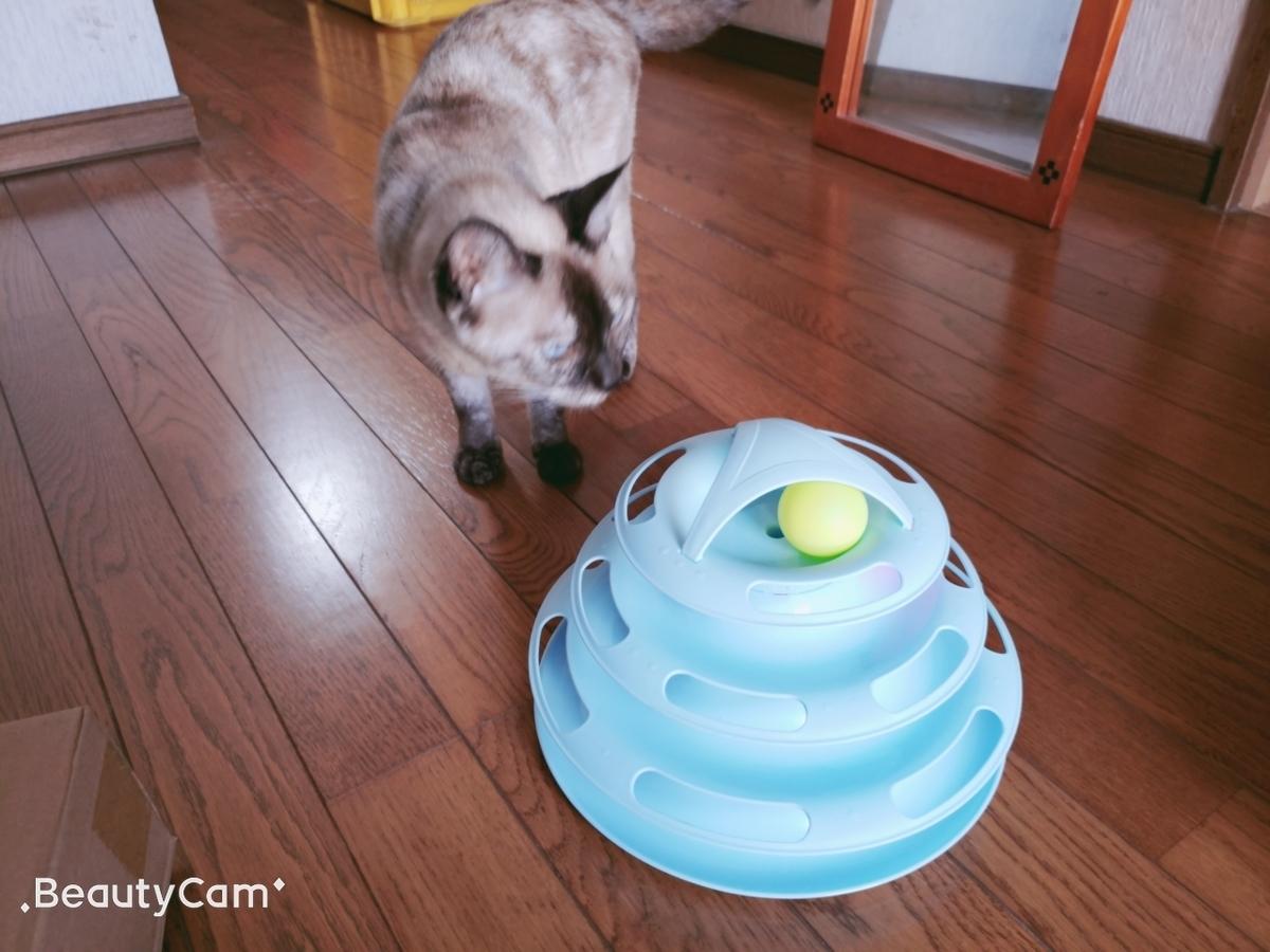 猫のまりんちゃん