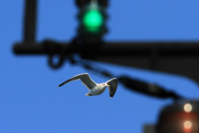 f:id:digibirds:20101214233629j:image