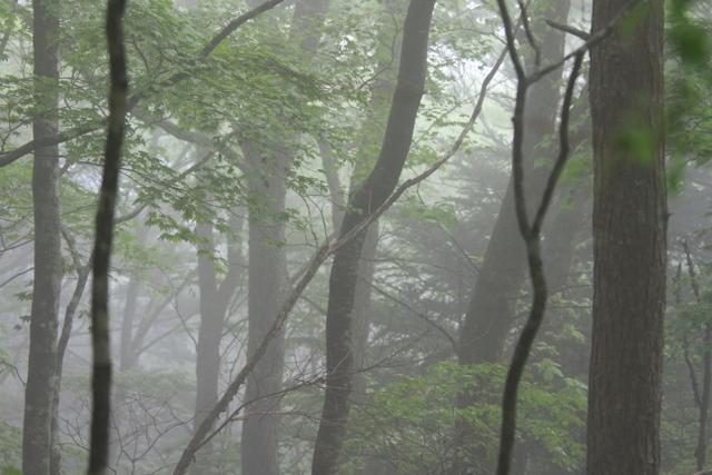 f:id:digibirds:20110620235907j:image