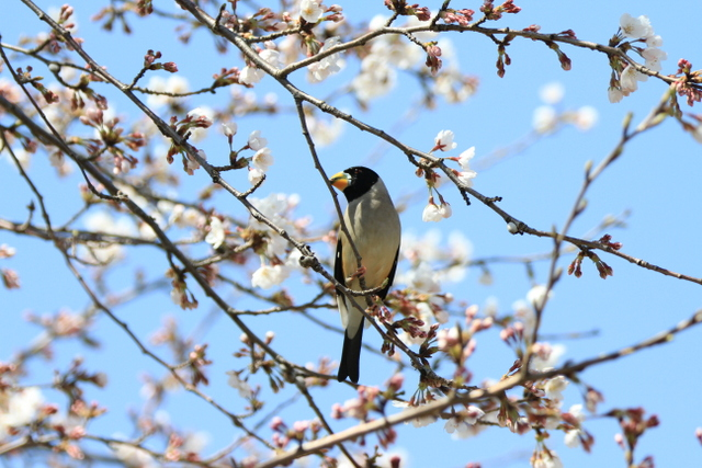f:id:digibirds:20120408182520j:image