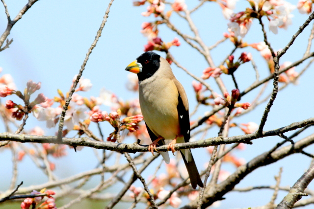 f:id:digibirds:20120408182525j:image