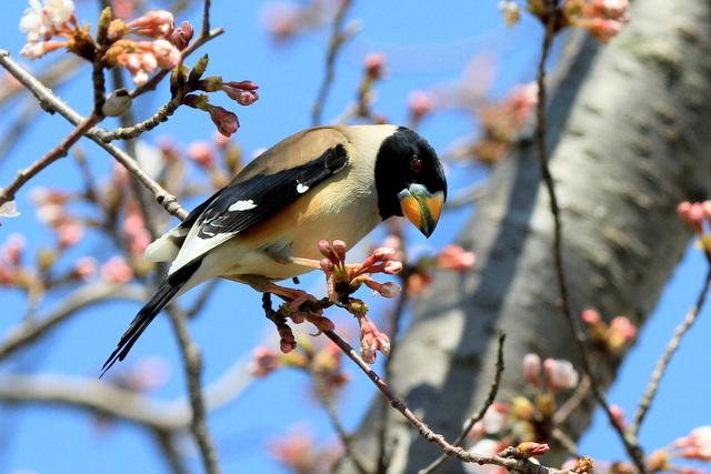 f:id:digibirds:20120408182526j:image