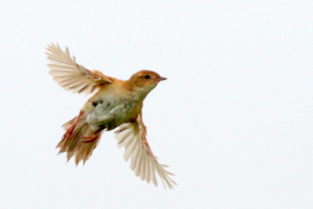 f:id:digibirds:20120621185940j:image