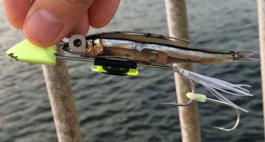 カスタマイズした太刀魚ゲッター